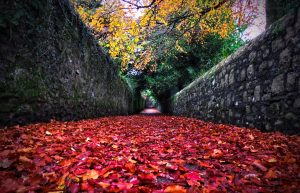 Ulverston in Autumn – Photo Competition Winner