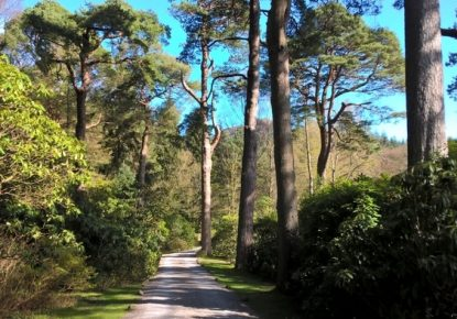 Treescapes Consultancy Ltd