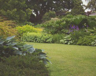 Shaun Barr Garden Services