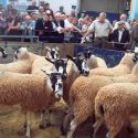Ulverston Auction Mart