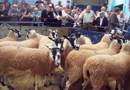 Ulverston Auction Mart
